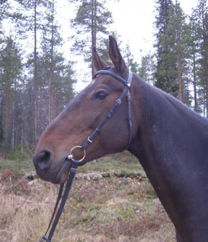 häst: Challit-huvud